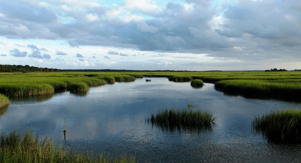 Salt marsh habitat in Cumberland Island